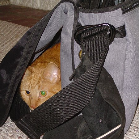 cats_6