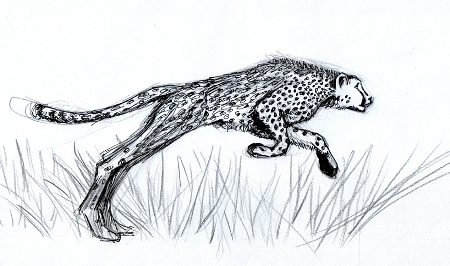 cheetah_web_small