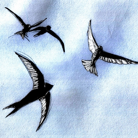 swifts_web_small